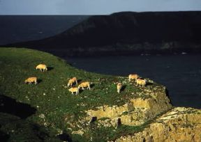 Galles. La costa rocciosa a Capo Worms, nella penisola di Gower.De Agostini Picture Library/G. Wright